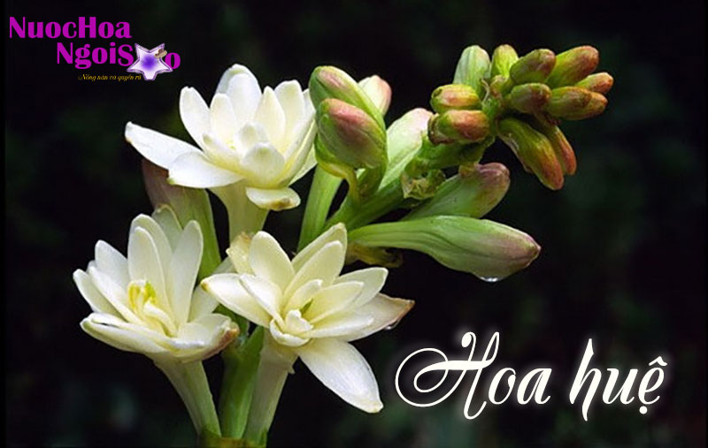 Người ta có thể dùng hương liệu chiết xuất từ tinh dầu hoa huệ để sản xuất nước hoa, xà phòng
