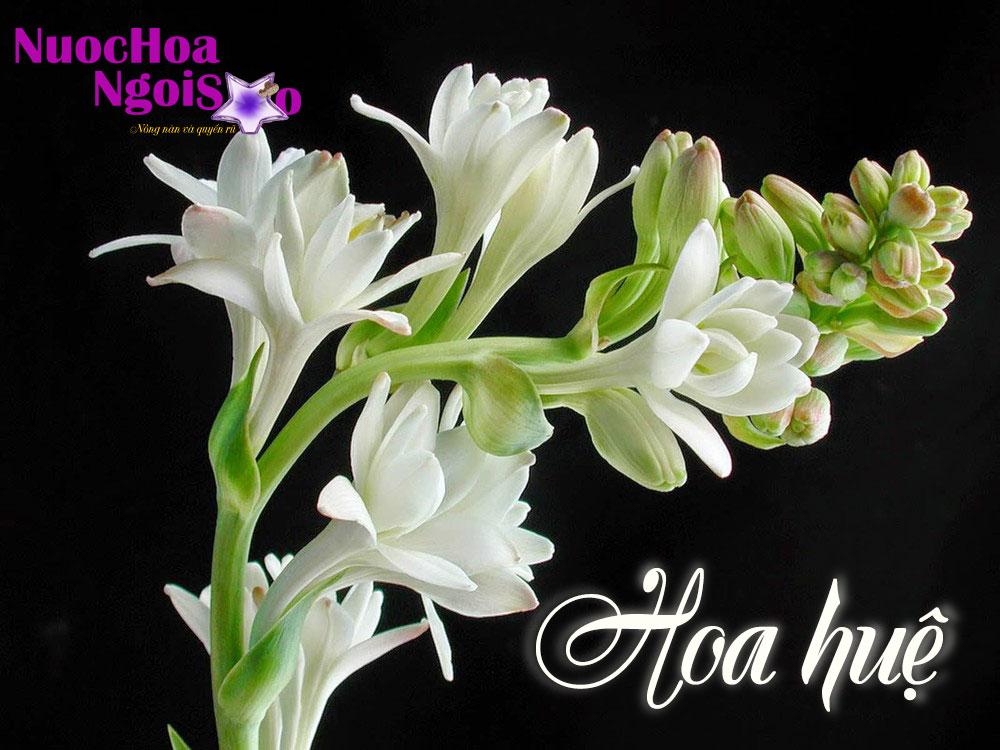 Tinh dầu hoa huệ - Hương thơm ngào ngạt về đêm
