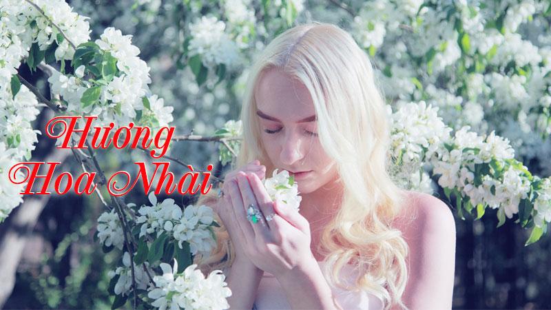 Tinh dầu hoa nhài – Hương thơm phản phất từ bồng lai