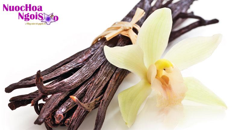 Quả lan phơi khô để chiết xuất vanila.