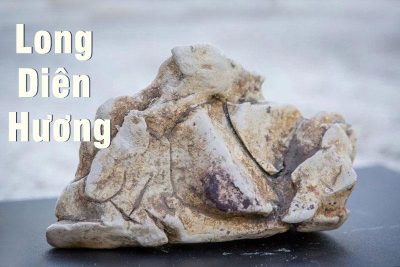Long diên hương – Báu vật đại dương