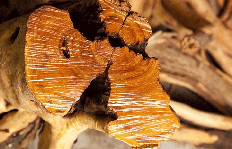 Khác với nhiều loại gỗ thơm khác, đàn hương giữ được hương thơm trong nhiều thập kỷ
