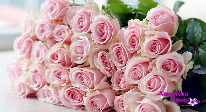 Vào buổi sáng nắng ấm, khi hoa hồng nở được một nửa thường tạo mùi hương mạnh hơn.