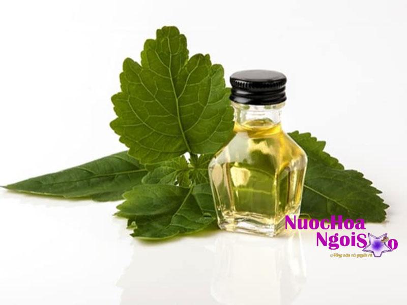 inh dầu của hoắc hương sau khi được chiết suất sẽ có hương thơm khá ngọt