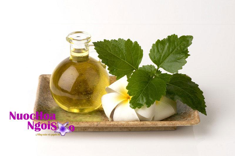 Tinh dầu chiết xuất từ hoắc hương có mùi thơm nhẹ, giúp khử mùi, đuổi côn trùng, kích thích tiêu hóa, làm đẹp, tái tạo tế bào, tăng tuần hoàn má