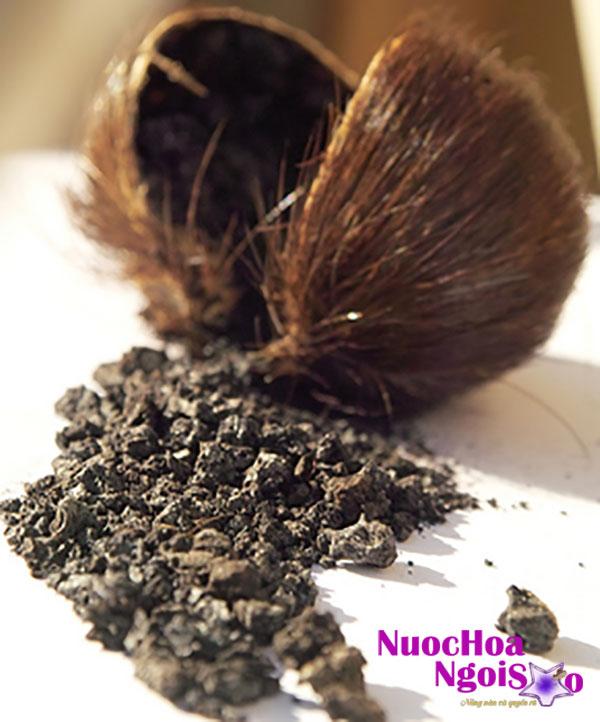 Xạ hương bao gồm chất dịch tiết từ động vật như hươu xạ, nhiều thực vật tỏa ra mùi hương tương tự, và các chất nhân tạo có mùi tương tự