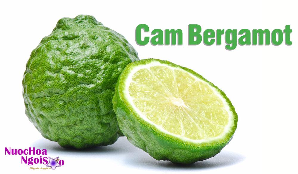 Vai trò của cam Bergamot trong ngành công nghiệp nước hoa
