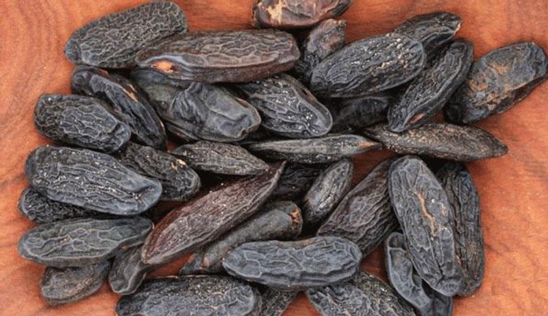 Loại đậu này có mùi thơm đặc biệt nên thường được sử dung trong ngành công nghiệp nước hoa.