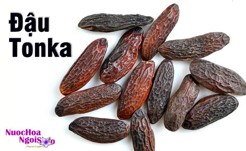Đậu Tonka – Hương liệu nước hoa đắt tiền
