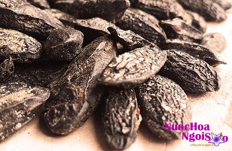 Loại đậu này có thể thay thế cho hương Vanila.