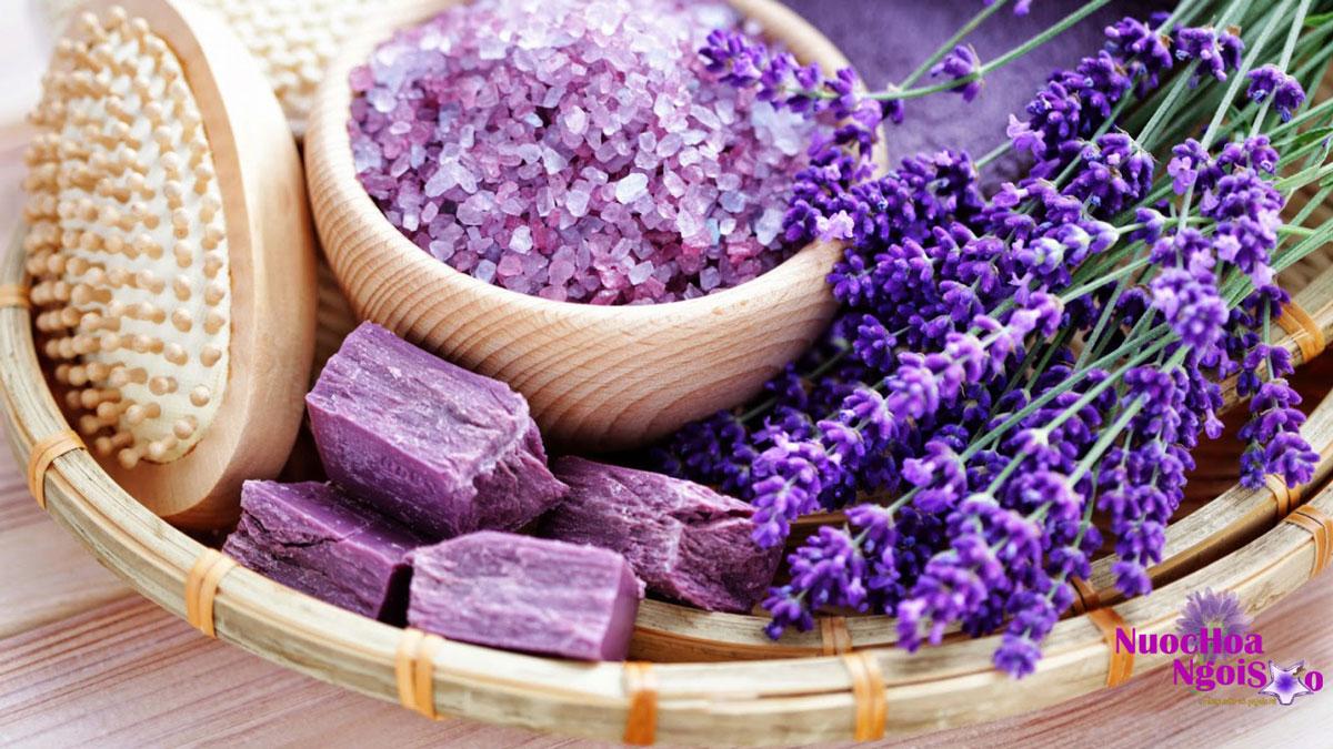 Oải hương được biết đến bởi chúng có mùi thơm nồng và có khả năng chữa bệnh.