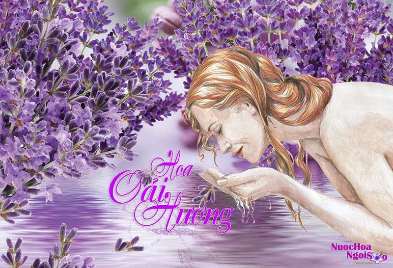 Tinh dầu hoa oải hương và hương thơm huyền bí khó tả