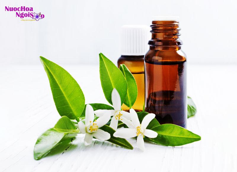 Hoa cam cũng là một trong những nguyên liệu chính trong ngành công nghiệp nước hoa