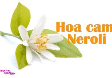 Tinh dầu hoa cam Neroli trong ngành công nghiệp nước hoa